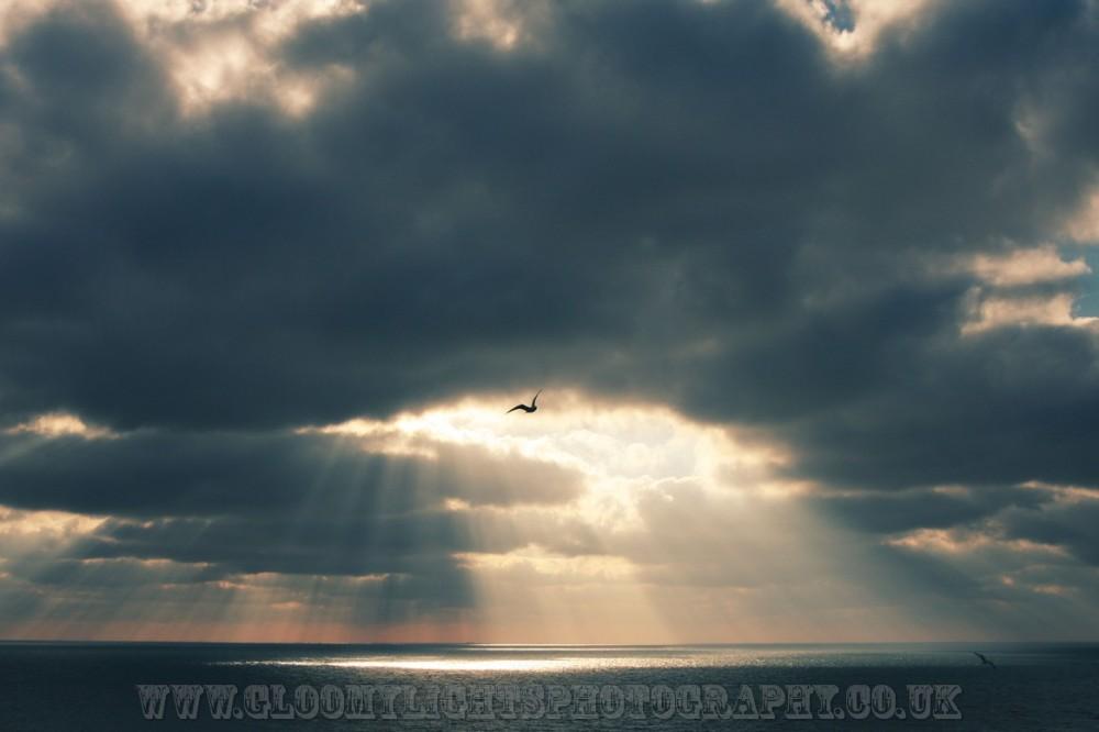 sunsea (5)