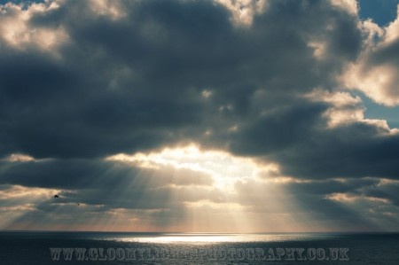 sunsea (7)
