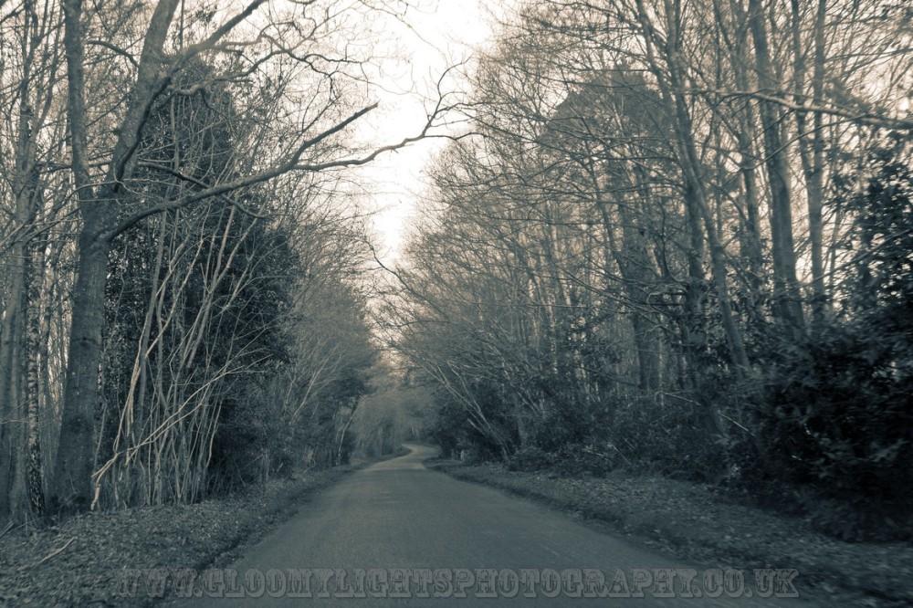 woods (1)