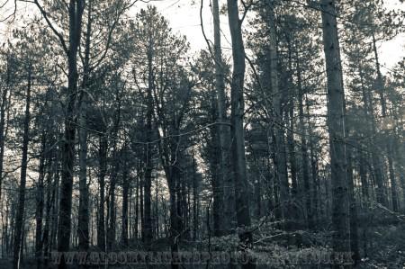 woods (10)