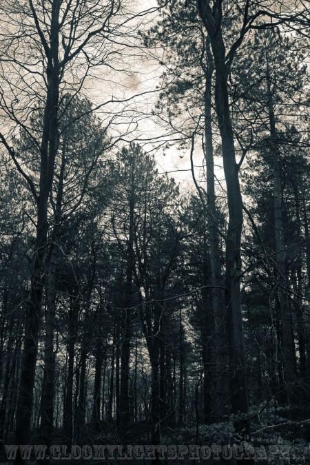 woods (11)