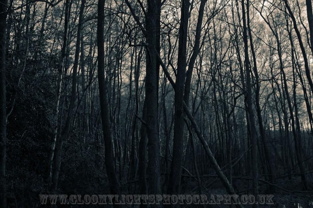 woods (15)