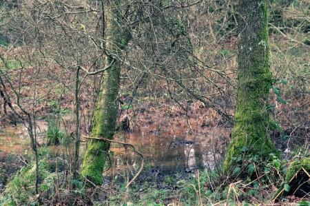 woods (21)