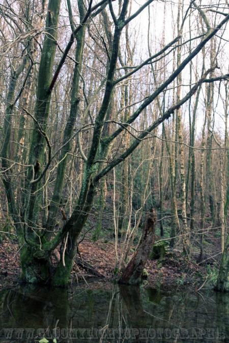 woods (23)