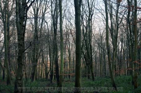 woods (4)
