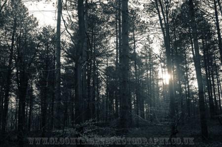 woods (9)