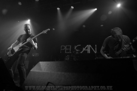 pelicann (59)